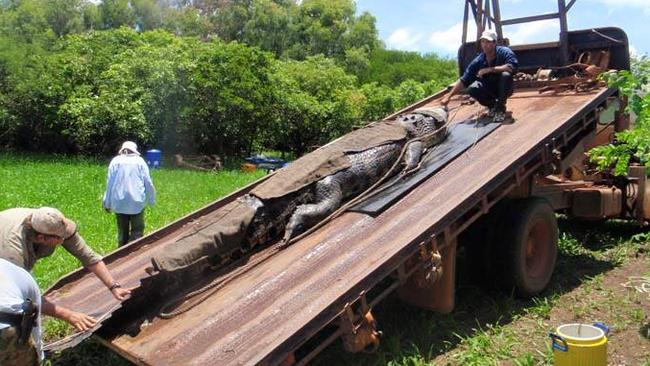 Outback Wrangler Matt Wright has caught the biggest crocodile of his career, weighing in at 890kgs and measuring 18.3ft long.