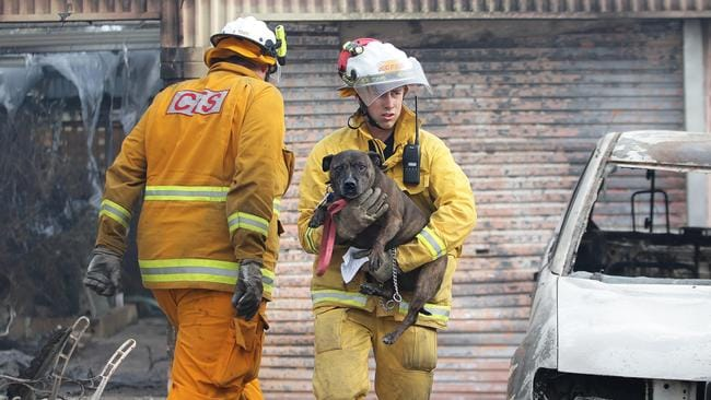 Few survivors ... Paracombe and Tea Tree Gully CFS rescue a dog from the Tea Tree Gully Boarding Kennel and Cattery, where 40 animals perished. Picture: Dylan Coker