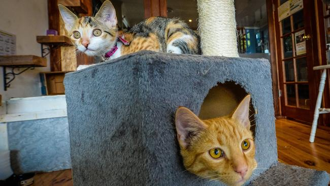 Meowme Cat Cafe