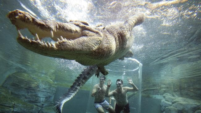 Tourists View Crocodiles From The Safety Of A Tube At Darwins Crocosaurus Theme Park