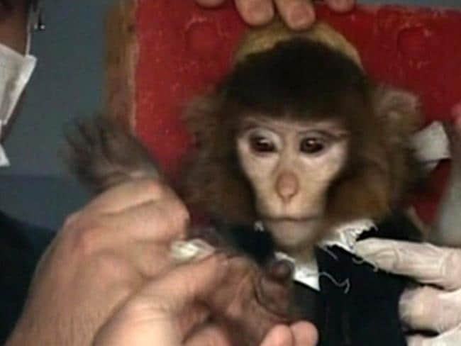 Monkey mission ... scientists in Iran surround a monkey ahead of a space launch on Jan. 28, 2013. Picture: AP