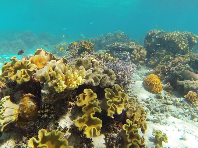 Climate change is the biggest threat to the Great Barrier Reef Marine Park. Picture: Brendan Radke.