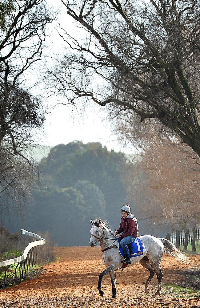 Puissance De Lune trains for the 2013 Melbourne Cup. A race he would never make after injuring himself in the Cox Plate. Picture: Nicole Garmston