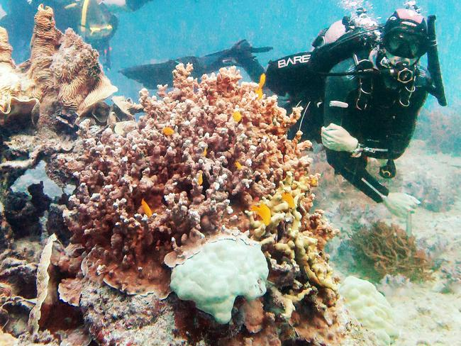 All proceeds from Midnight Oil's 'Oils at the Reef' concert will go towards scientific research aimed at protecting the reef. Picture: Brendan Radke