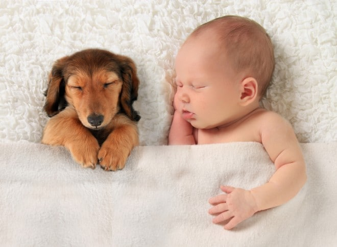 Newborn baby and puppy
