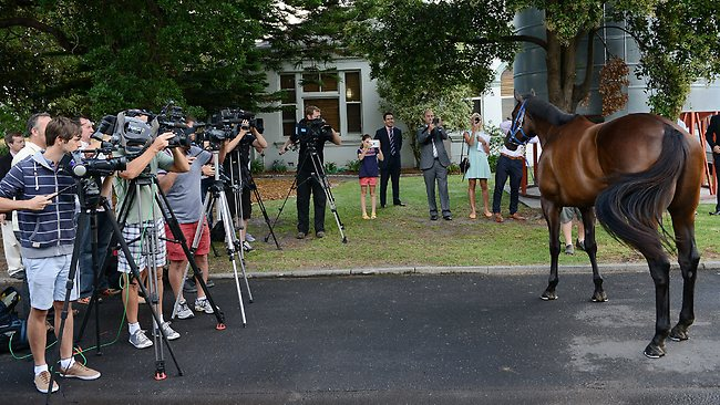 The biggest show in town: Black Caviar parades for the cameras at yesterday's morning's media call at Caulfield as she prepares to put a positive spin on racing when she makes her long-awaited return at Flemington tomorrow.