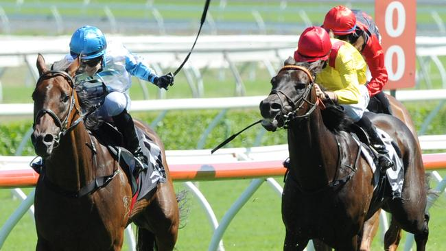 Testashadow (left) has won over $1.2m in prizemoney for his owners. Picture: Simon Bullard