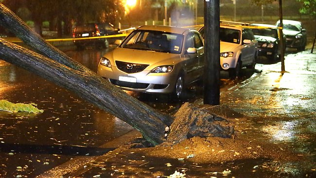 A tree falls on a residential road in Glebe. Picture: Bill Hearne