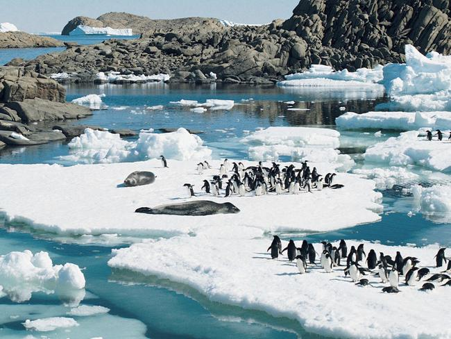 Nature's beauty ... Adelie penguins and leopard seals rest on ice floes in Rauer Island, East Antarctica. Picture: Supplied