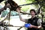Senior native mammal zoo keeper Nathan Langley with tree kangaroos Kiunga and Makali. Pictures: NOELLE BOBRIGE