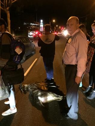 People were left scratching their heads about how a deer was hit by a car in peak hour traffic. Picture: AAP Image/Christopher Zinn
