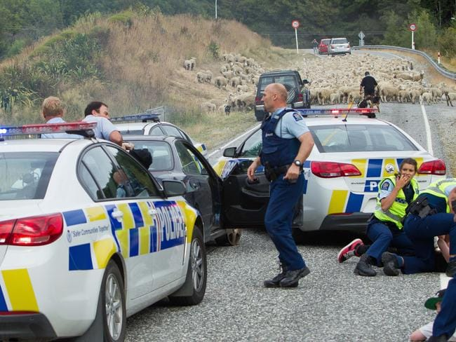 Sheep upstaging the local police. Picture: James Allan
