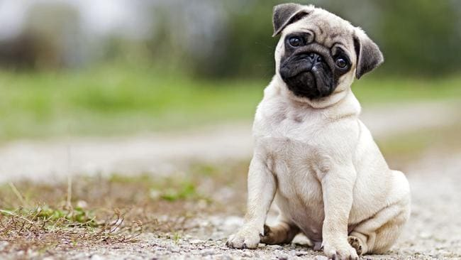 Five things your dog is perplexing to tell you