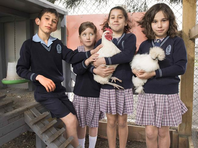 St Mark's students Emmanuel, Ruby, Charlotte and Vivian with the school's two remaining chickens. . Picture: Ellen Smith