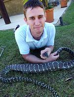 <p>Snake catcher Gordon Canning with a 1.8 metre carpet python that made a meal of a family pet cat.</p>