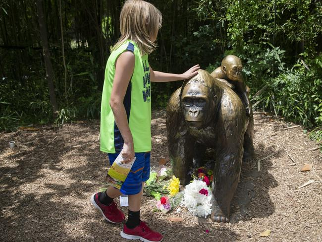 A child touches the head of a gorilla statue outside the Gorilla World exhibit at the Cincinnati Zoo & Botanical Garden. Picture: AP Photo/John Minchillo