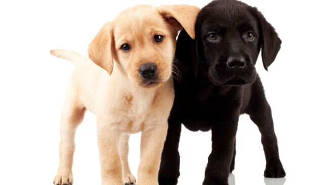Puppies: The key to success? Picture: Thinkstock