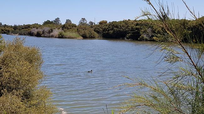 Greenfields Wetlands has been closed due to snake sightings. Source: Supplied