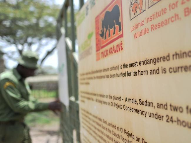 One of the dedicated Rhino care givers closes the gates to the enclosure that was occupied by Sudan. Picture: Tony Karumba