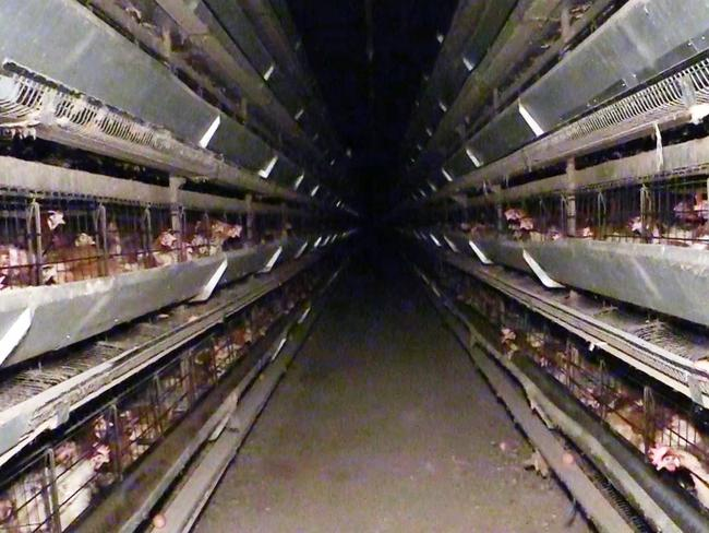 Hens stacked high in rows of cages.