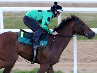 Black Caviar's first foal has its maiden jumpout at Flemington.