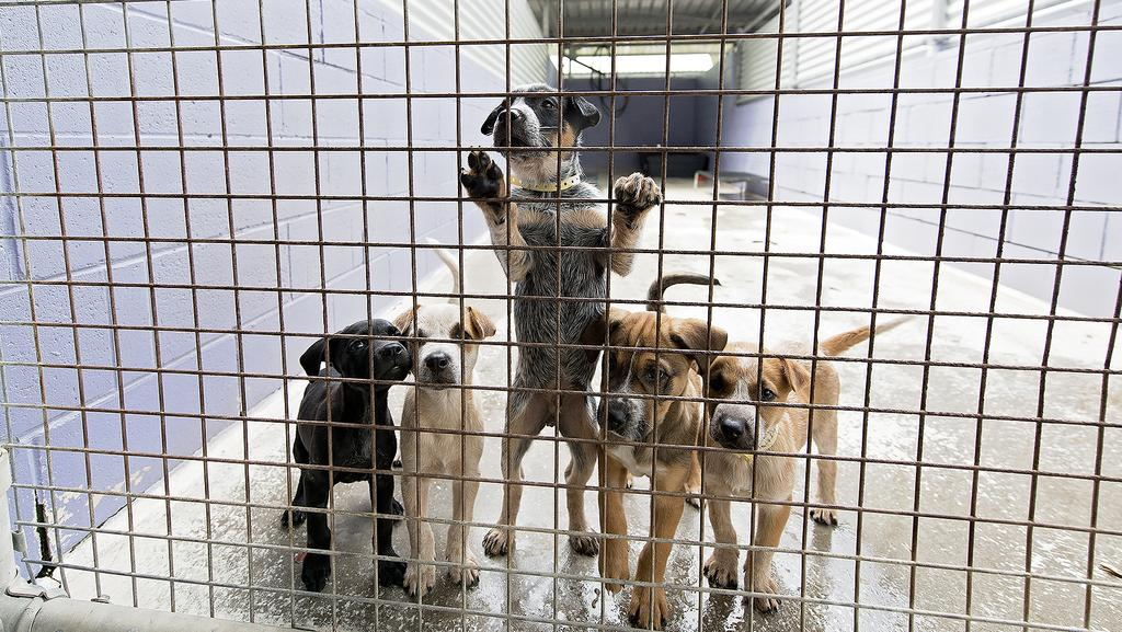 Animal Welfare League Queensland says the rise in numbers at its shelters is largely due to a lack of pet-friendly rental accommodation. (Pic: News Corp)