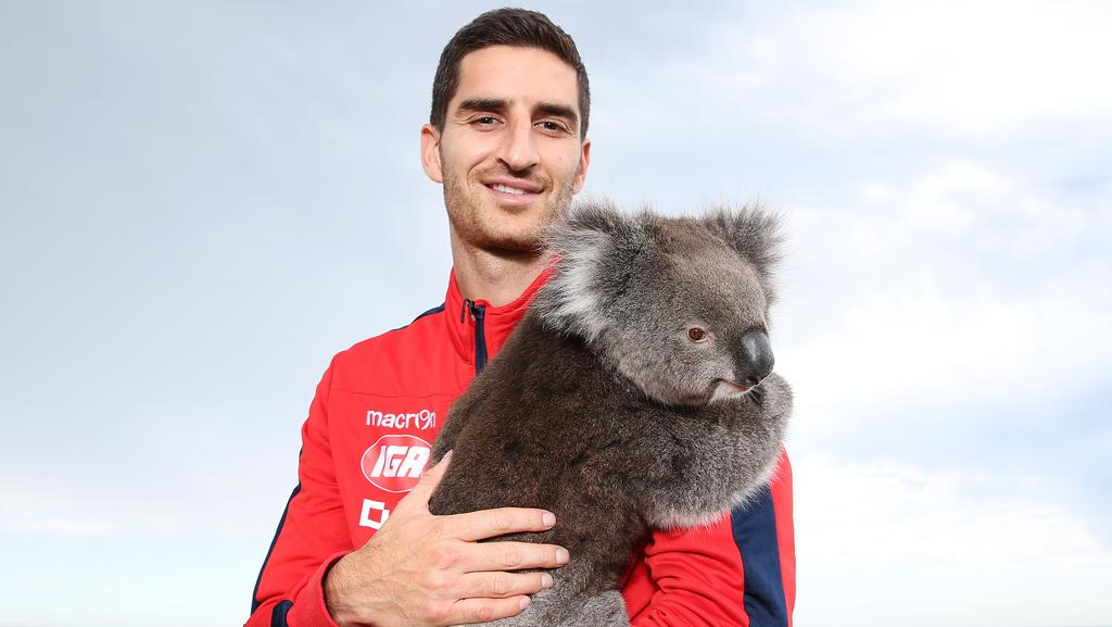 Adelaide United's Iacopo La Rocca with a Honey the koala near the Glenelg jetty. He is becoming an Australian. 01/12/16 Picture: Stephen Laffer