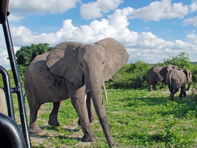 Wildlife watching experiences for tourists are seen as a driver of economic progress in African nations. Picture: Istock