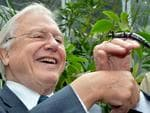 David Attenborough is pictured at Melbourne Zoo meeting a Phasmid or Lord Howe Island Stick Insect, thought to have been extinct