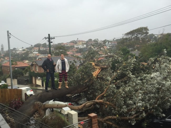 Bird's eye view ... Aleks Strikis (right) and a mate stand on a downed tree in Waverley. Picture: Aleks Strikis