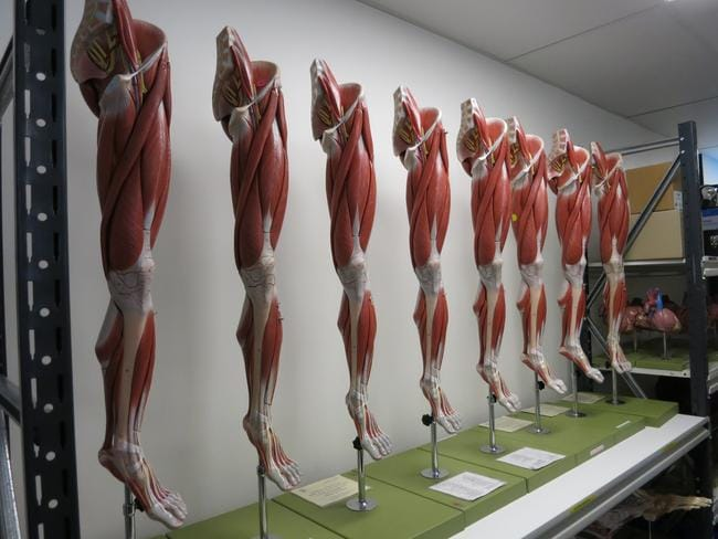 Some of the leg models.