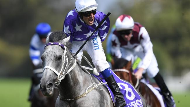 Rosehill Guineas winner D'Argento is top lightweight chance in the Doncaster Mile. Picture: AAP