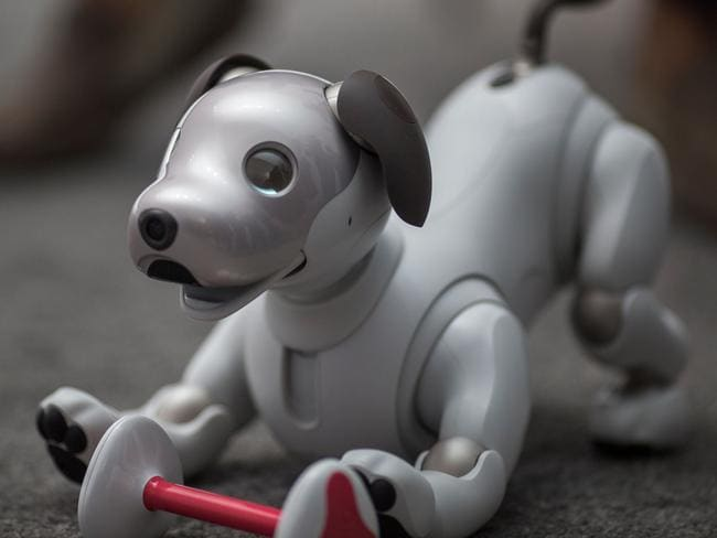 The newest generation of the Aibo robot, which uses artificial intelligences, is demonstrated on the eve of CES in Las Vegas. Picture: AFP
