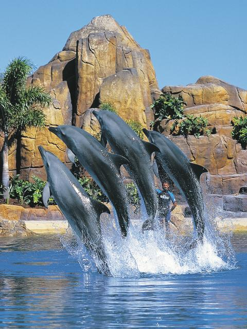 BIG SPLASH: Catch the Affinity Dolphin Presentation at Sea World's Dolphin Beach.