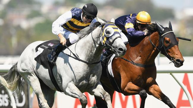 Grey Lion gets his chance for a win in the Ballarat Cup after some good form this spring.