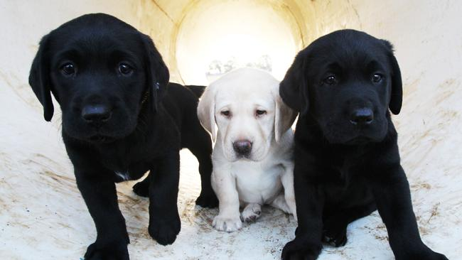 Puppies welcome.