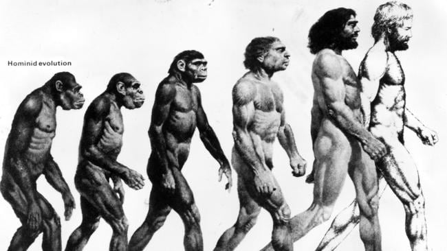 Artists impression of early hominid human evolution from left to right, Ramapithecus, Australopithecus, Homo erectus, Neanderthal man, Cro Magnon man and modern man Homo sapiens.