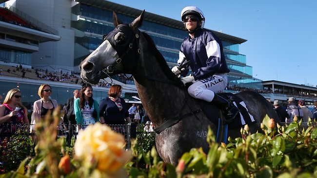 As Lloyd Williams's sole representative in Caulfield Cup, punters come for Fawkner. Picture: Colleen Petch