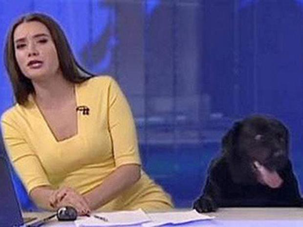 Dog crashes in on live TV broadcast