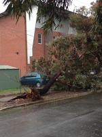 Power lines pulled down by a fallen tree next to a school in West Croydon. Picture: Mitch Mott