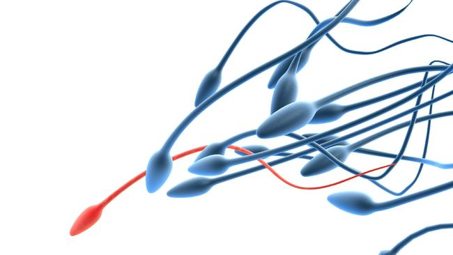Heavy ... Losing weight can improve the sperm quality, researchers say. Picture: News Corp