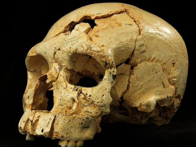 Like something from beyond GoT's great wall ... an early Neanderthal skull uncovered from the Sima de los Huesos cave in Spain. Picture: Madrid Scientific Films