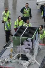 <p>Preparations are made for Wang Wang and Funi to leave the airport. PIC: Tait Schmaal</p>