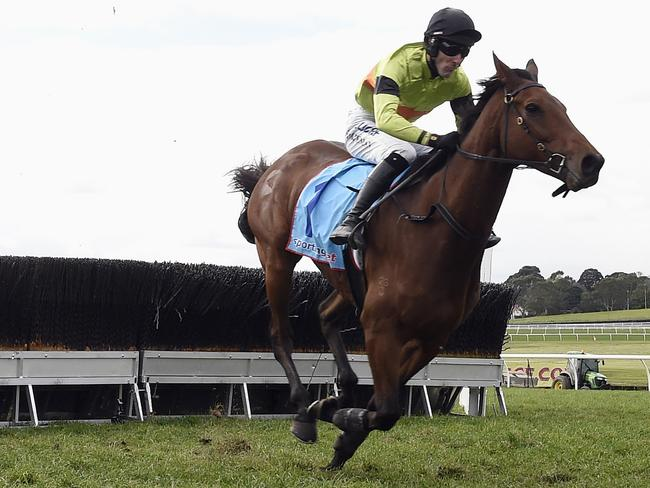 Bashboy clears out from his rivals at Sandown. Picture: Andy Brownbill