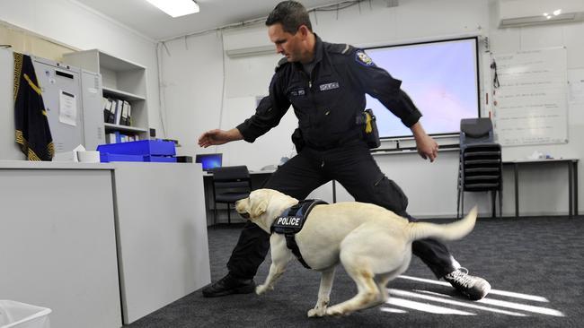 Intensive Dog Training Perth