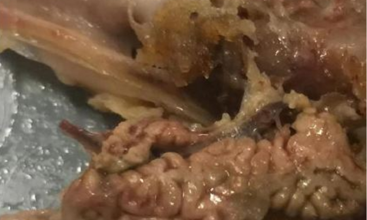 Sydney woman posts photo of 'brains' in KFC chicken