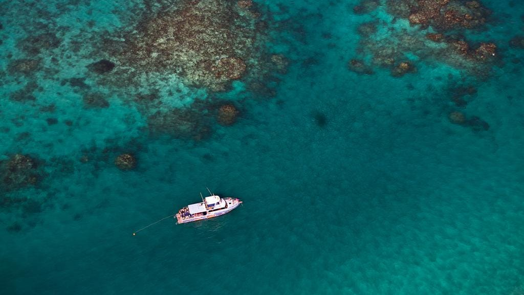 See Whale Sharks From Microlight Or A Kayak On An Eco