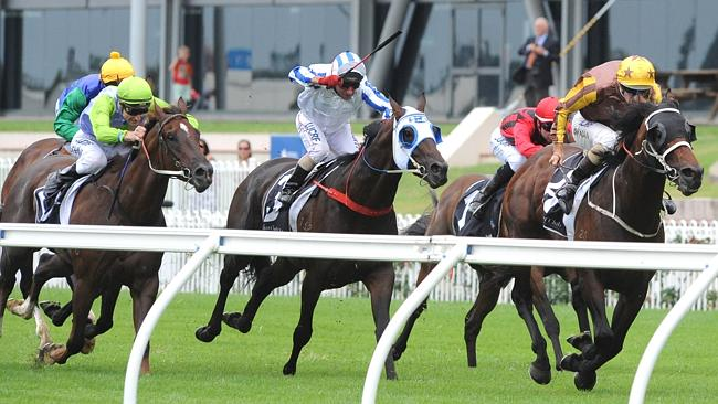 El Roca, to be ridden by Hugh Bowman, is the favourite for the Randwick Guineas. Picture: