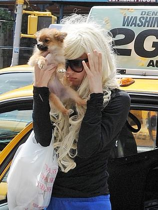 Bynes covers her face with her puppy in NYC.