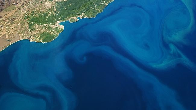 A ploom of plankton in the Black Sea, taken by an astronaut from the International Space Station, on May 9, 2013.